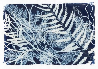 Fern Collection, 2014