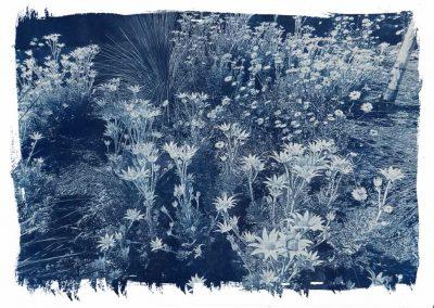 Flannel Flowers, 2015