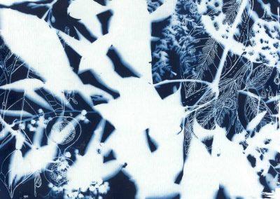 forest blueprint A4, 2015