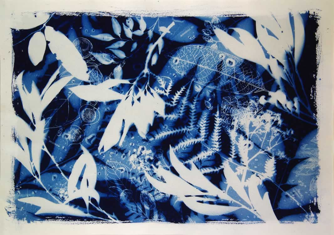 Works on paper mollie bosworth artist forest blueprint 2015 a3 malvernweather Image collections